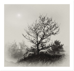 Foggy Wrekin (Steve Brodie) Tags: yahoo:yourpictures=blackandwhite yahoo:yourpictures=weather fineartphotosanawesomeshotplatinumphoto