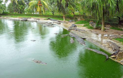 Langkawi Crocodile farm23