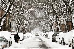 Shoveling Man (Linus Gelber) Tags: auto street nyc trees winter snow newyork man cars ice brooklyn snowdrift snowstorm headlights cobblehill shovel snowfall blizzard courtstreet carrollgardens shoveling snowshovel citystreet wintry snowpocalypse winterstreet douglassstreet thursdaywalk canon28135mmisusm snowicane utata:project=tw201