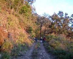 searching for woodpeckers and woodcreepers (Stylurus) Tags: from road station de mexico reserve jalisco biosphere sierra research lasjoyas manantln elalmeal