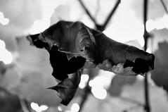 23/365 (doitforlove) Tags: blackandwhite dpssilhouettes