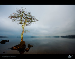 Bonsai  - Loch Lomond (David Hannah) Tags: blue tree water night clouds scotland bonsai loch lomond  chlorophyll welcomeuk