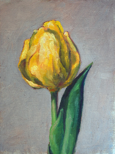tulip - a daily painting