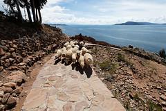 baudchon-baluchon-titicaca-IMG_9225-Modifier