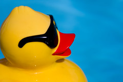 One Cool Duck (kentsmith9) Tags: blue color colors pool yellow canon eos glasses is duck beak shades plastic usm lseries f3556l 40d ef28300mmf3556lisusm canon40d ef28300mm notmaxgroup