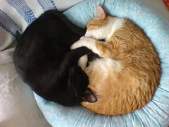 Ying Yang, originally uploaded to Flickr by Bibi