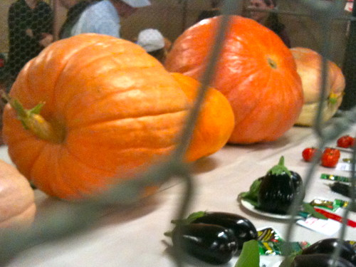 Big fat PUMPKINS