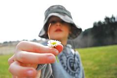 Jacob's flower (Ann Marie Detavernier / Household 6 Diva) Tags: flower spring jacob armywife militaryspouse household6diva annmariedetavernier