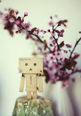 Danbo loves Blossom! (Morphicx) Tags: blur blossom bokeh 5d 50mmf14 danbo bokehwhore