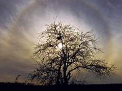 A tree (of life:) with rainbow - halo phenomen:) Drzewo z tcz - zjawisko halo:) (raphic :)) Tags: sky sun tree lumix rainbow malcolm halo poland polska panasonic circular treeoflife soce lublin tcza drzewo niebo raphic phenomen fz8 dmcfz8 thesecretlifeoftrees mygearandmepremium mygearandmebronze mygearandmesilver mygearandmegold mygearandmeplatinum tplringexcellence