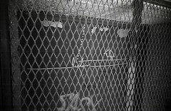 I know why the caged bird... listens. (teh hack) Tags: camera bridge bw bird film mike analog trash toy downtown edmonton slim wide delta nb iso plastic alberta 400 200 pro asa clone vivitar ultra ilford ei listen toycam analogic trashcam 22mm ddx ilfotec eximus