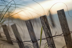 Happy Fence Friday: Beach Edition! (pixelmama) Tags: beach sunrise sand florida nirvana pensacolabeach gettyimages locationlocationlocation gulfislandsnationalseashore hff frontpageexplore fencefriday