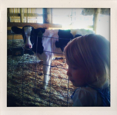 Ansley and a Calf