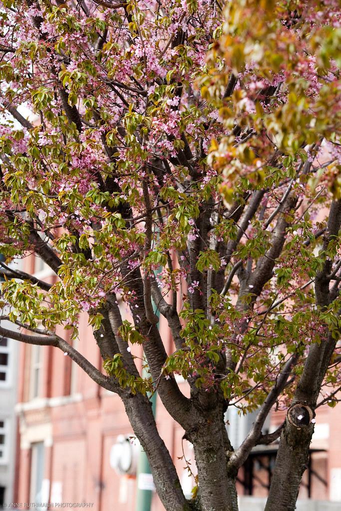 Spring_In_Lowell-1749.jpg