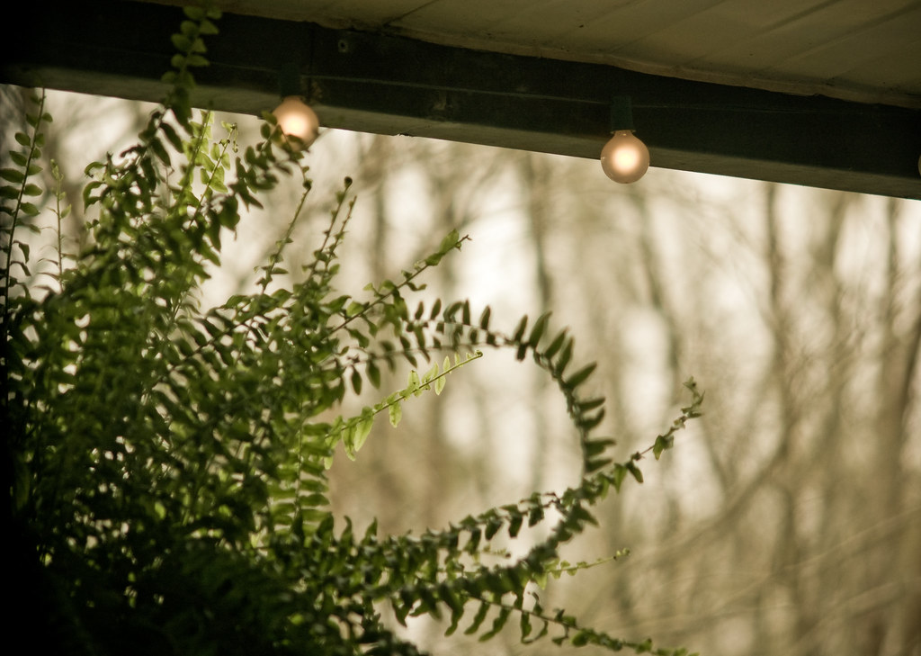 """I saw the slanting shadows of ferns on a greenhouse floor"""