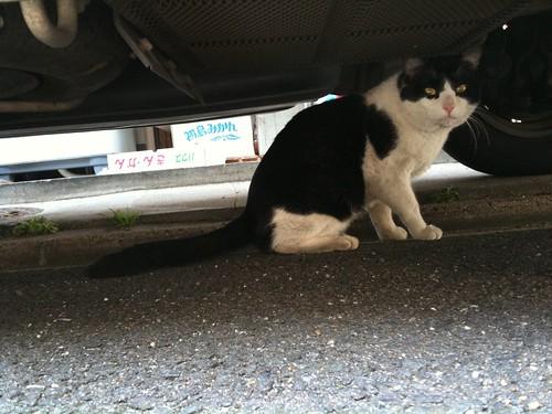Today's Cat@2010-04-18