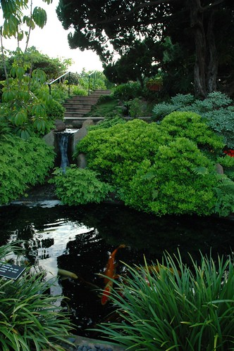 Koi pond and little waterfall deep in the Self-Realization Fellowship Meditation Garden, Encinitas, California, USA by Wonderlane