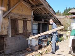 Masa-san en action