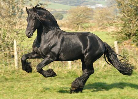 wallpapers horses. horses wallpapers for