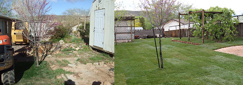 Before and Afters of our Yard