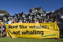 Save the whales, not whaling (Greenpeace New Zealand) Tags: newzealand protest greenpeace wellington whales whaling protestmarch johnkey