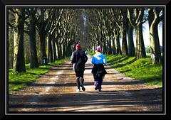 correndo (cermannara) Tags: sport alberi running ferrara mura corsa prospettiva viale