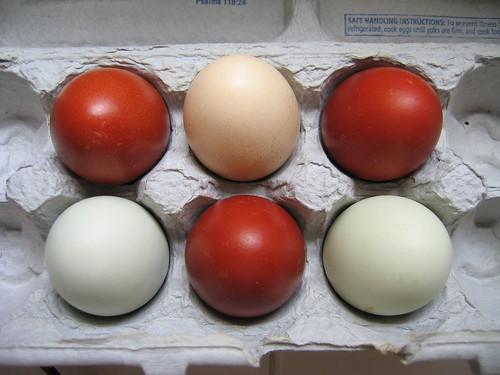 ovo colorido