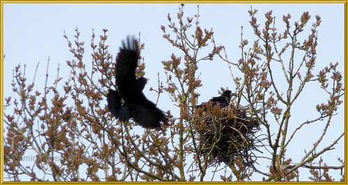 Rookery 3