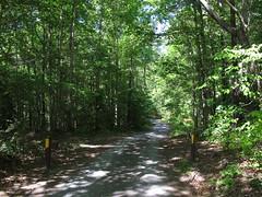Uwharrie bike trails Photo