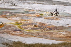24 Mammoth Hot Springs 137 (Mark Baker.) Tags: yellowstone usa mammouth hot springs coloured colored white terraces pools ponds brown green 2009 september wyoming national park united states america mark baker photo picsmark photograph mammoth