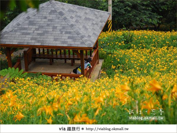 【台中休閒農場】2010金針花~新社沐心泉金針花10