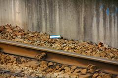zwerfafval in Nieuwegein (Nepeta) Tags: trash garbage litter pollution basura lixo nieuwegein rommel sujeira vuilnis rotzooi afval troep zwerfafval escombraria