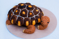 Turtle Cake! (Tina's Cakes) Tags: animal cake turtle chocolate ganache realistic fondant