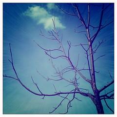 Tree + Sky