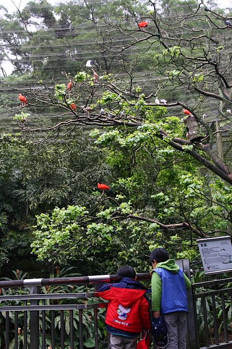 台北木柵動物園0006