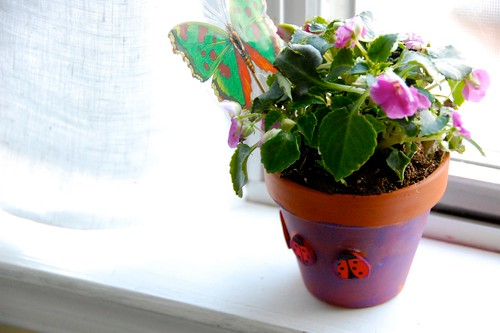 Mother's Day potted plant