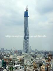 錦糸町のホテルから東京スカイツリー見えたよ