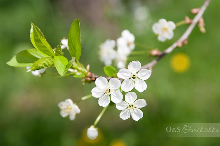 Весна от гродненского детского фотографа Ольги Горчичко