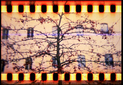 more of it (bildministeriet) Tags: color tree film experiments sweden fujisuperia200 sprocketholes holgan hrlanda respoling maybeineedmorecolorinmylife