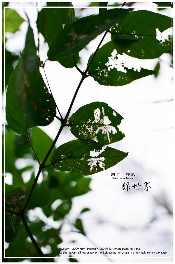 秋末 - 綠世界