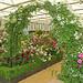 David Austen Roses-158
