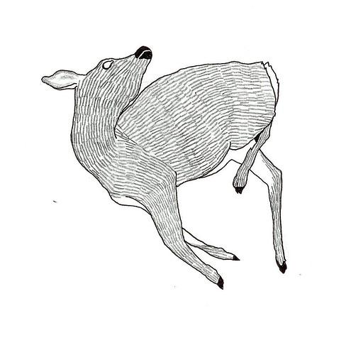 dead deer II