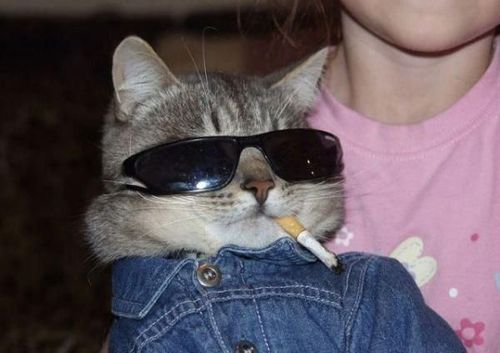 coolkitty