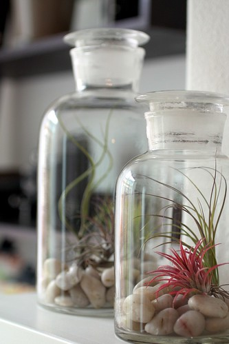 tiny bottle terrariums