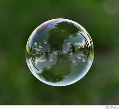 Bubble (Richard Pilon) Tags: reflection nikon sphere bubble soapbubble d90 nikond90