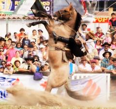 El boleador (Eduardo Amorim) Tags: horses horse southamerica caballo uruguay cheval caballos cavalos prado montevideo pferde cavalli cavallo cavalo gauchos pferd hest hevonen chevaux gaucho  amricadosul montevidu hst uruguai gacho  amriquedusud  gachos  sudamrica suramrica amricadelsur  sdamerika jineteada   americadelsud gineteada  americameridionale semanacriolla semanacriolladelprado eduardoamorim iayayam yamaiay semanacriolladelprado2010