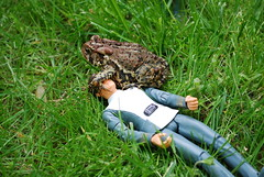 A strange creature has attacked the Captain. (darbysaurus.) Tags: startrek grass actionfigure attack toad captain kirk ded