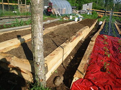 Double raised bed for sweet potatoes