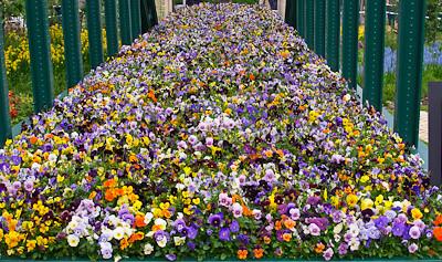 2010-05-25   Chelsea Flower Show  034.jpg