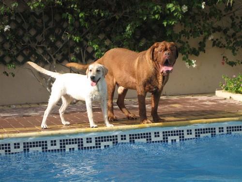 Mollie & Friend